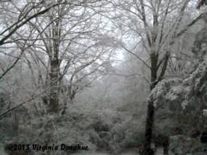 2-16-13-snow2Copyright